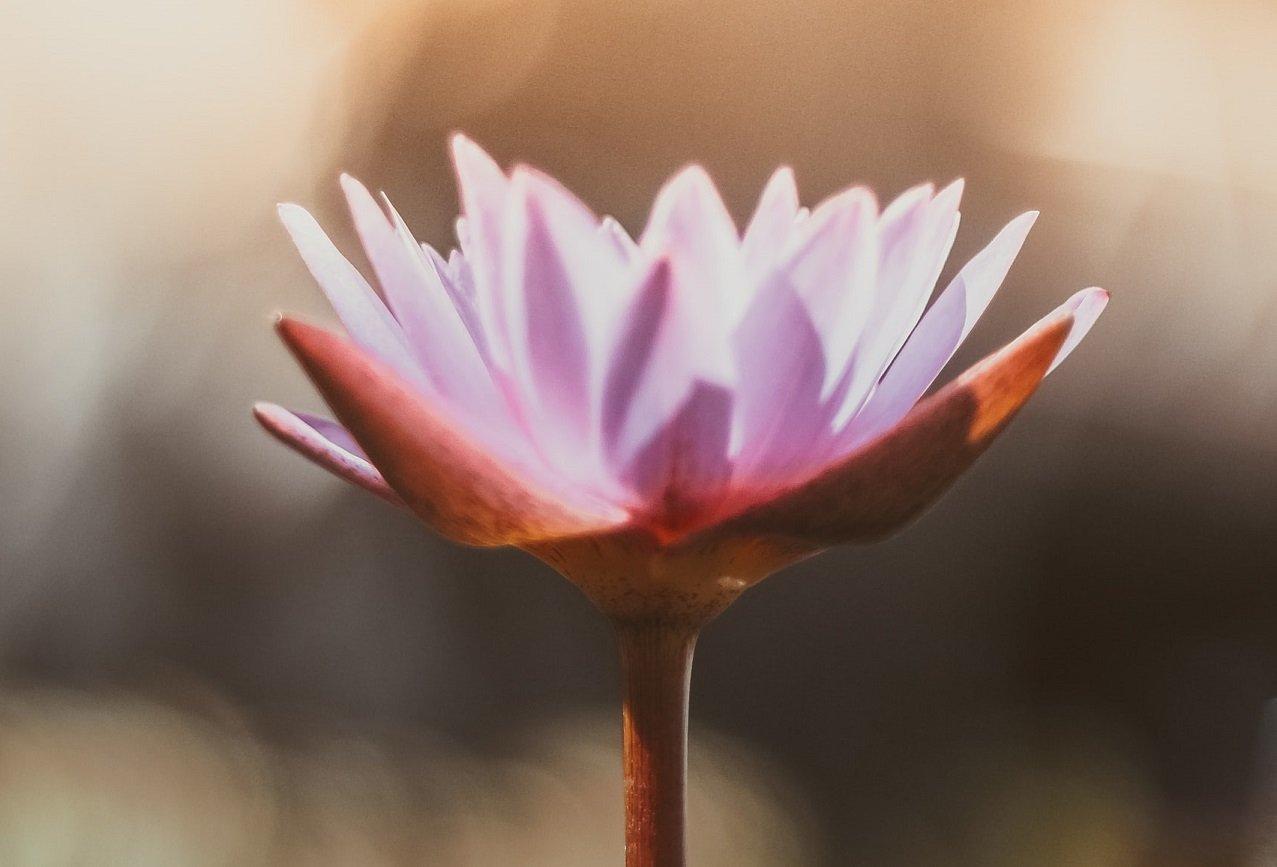 Nuovo cerchio di meditazione